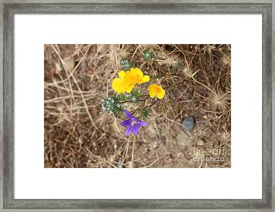 Framed Print featuring the photograph We Are Family by Marie Neder