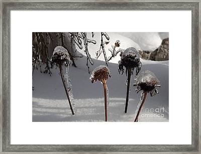 We Are Four Framed Print