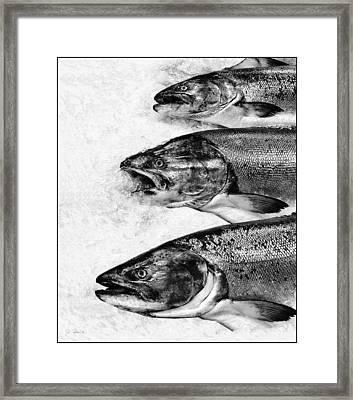 We Are Not Amused Framed Print by Joe Bonita