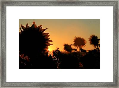 Framed Print featuring the photograph We Are Sunflowers by Chris Berry