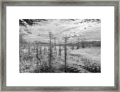 We Cant Walk Framed Print