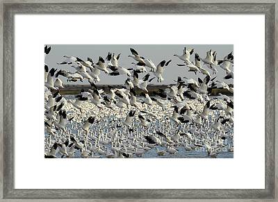 We Have Lift Off 1 Framed Print by Bob Christopher