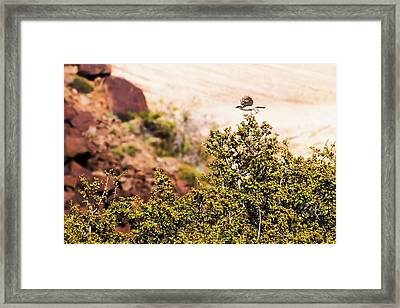 We Have Takeoff Framed Print by Onyonet  Photo Studios
