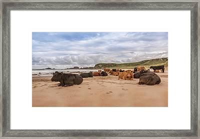 We Moo Like To Be Beside The Seaside Framed Print by Roy McPeak
