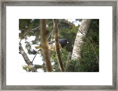 We Saw Each Other Framed Print by Magda Levin-Gutierrez