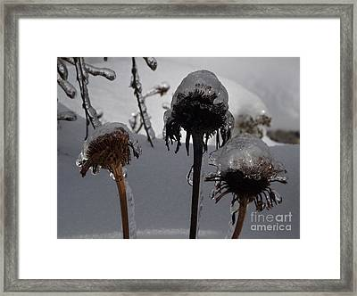 We Three Pods Framed Print