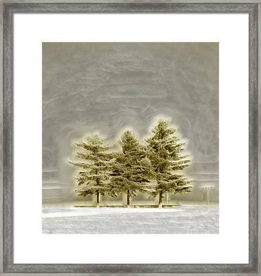 We Three Trees Framed Print