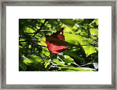 Wealth Framed Print by Alan Rutherford