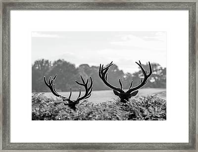 Framed Print featuring the photograph Weaponry by Paul Farnfield