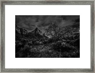 Weather Tree Zion National Park Framed Print by Scott McGuire
