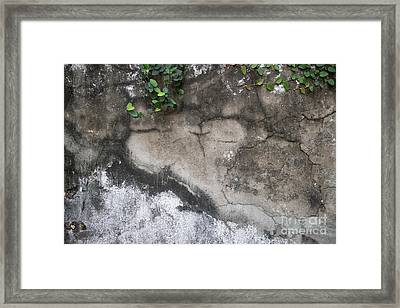 Weathered Broken Concrete Wall With Vines Framed Print