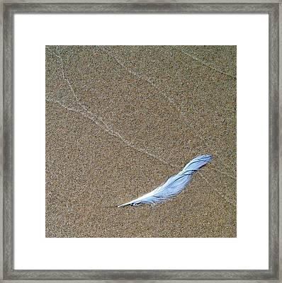 Weathered Feather  Framed Print by Michelle Calkins