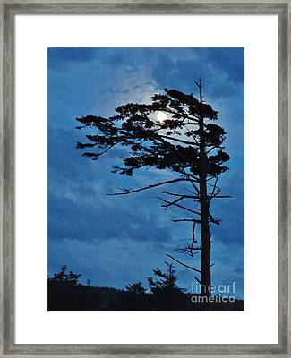 Weathered Moon Tree Framed Print
