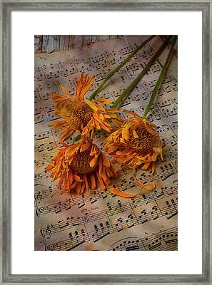 Weathered Sunflowers Framed Print by Garry Gay