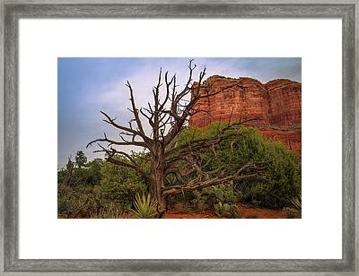 Weathered Tree At Courthouse Butte Framed Print