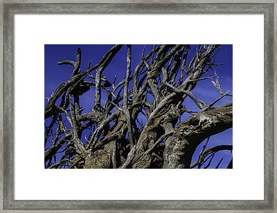 Weathered Tree Roots Framed Print