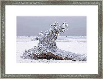 Weathered Tree Trunk In Winter Framed Print by Tim Grams