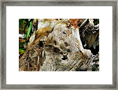 Weathered Wood Framed Print