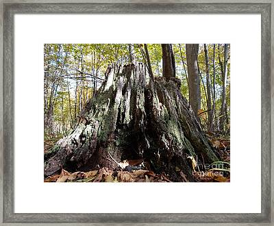 Weatherlog-3 Framed Print by The Stone Age