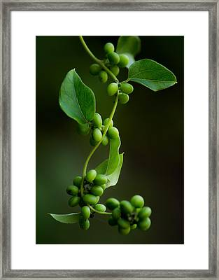 Weaving Vines Framed Print by Shelby  Young