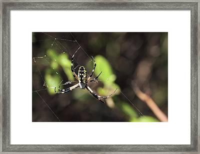 Web Builder Framed Print