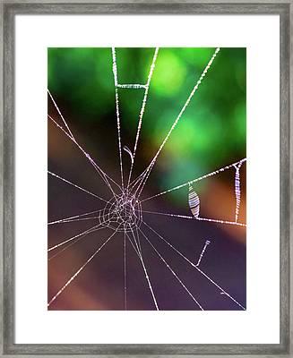 Web Designing Framed Print by Steve Harrington