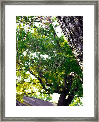 Web Framed Print by Kate Collins