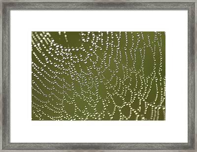 Web Of Jewels Framed Print by Hazy Apple