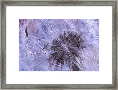 Web Of Lies Framed Print by Jacqueline Lewis