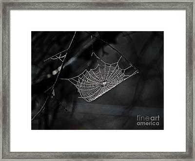 Web Of Lies  Framed Print