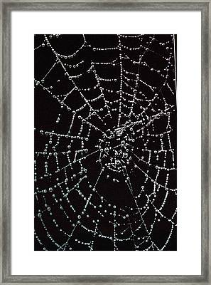 Web Of Pearls Framed Print by Rebecca Fitzgerald