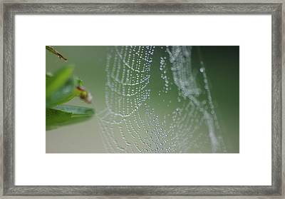 Web Portrait 1 Framed Print