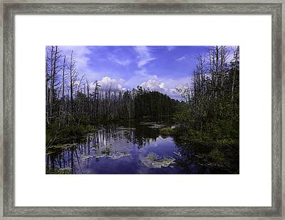 Webb Cedar Swamp Blog Framed Print by Louis Dallara