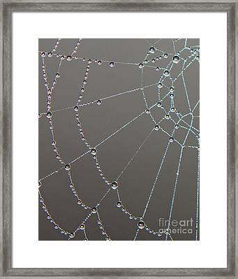 Webbed World Framed Print by Lloyd Alexander