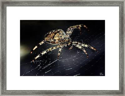 Framed Print featuring the photograph Webmaster by Martina  Rathgens
