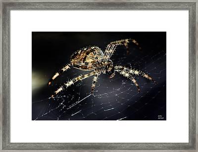 Webmaster Framed Print by Martina  Rathgens
