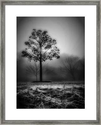 Webs We Weave Framed Print by Skip Willits