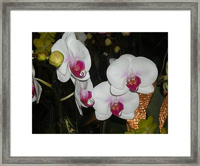 Framed Print featuring the photograph Wedding Orchids by Kim Prowse