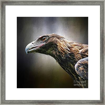 Wedge-tailed Eagle Portrait By Kaye Menner Framed Print
