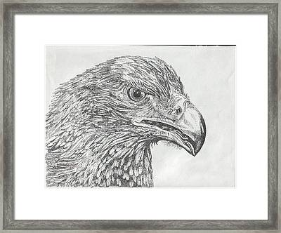 Wedgetail Eagle Framed Print by Leonie Bell