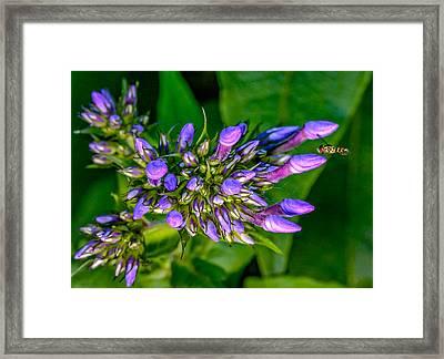 Wee Bee Framed Print by Steve Harrington
