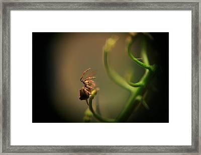 Wee Hunter Macro Framed Print by Terry Perham