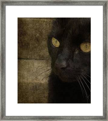 Wee Sybil  Framed Print by Paul Lovering