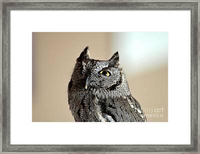 Wee Western Screech Owl Framed Print