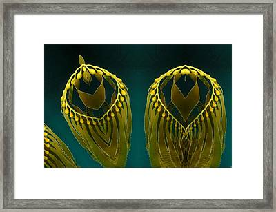 Weed 2 Framed Print by Ron Bissett