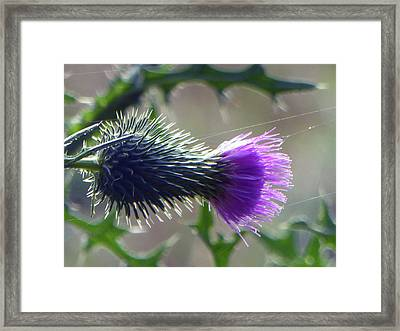 Weed Flower 2 Of 5 Framed Print by Tina M Wenger