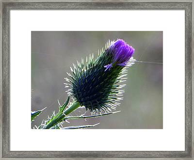 Weed Flower 3 Of 5 Framed Print by Tina M Wenger