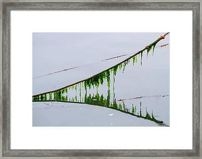 Weed Line Framed Print