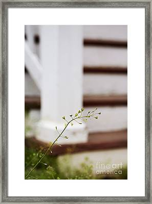 Weed Framed Print by Margie Hurwich