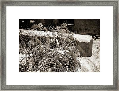 Weeds And Snow Framed Print by Jon Burch Photography